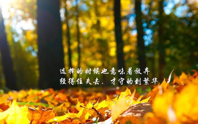 励志语录:选择的时候也意味着放弃,经得住失去,才守的到繁华